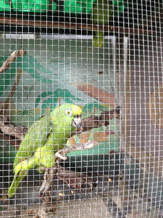 Bay View Suites Paradise Island: Parrots at the resort