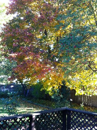 McFarland Inn Bed and Breakfast: Back Yard in the Fall