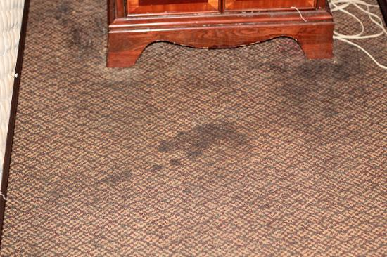 Howard Johnson Macon: Carpet stains