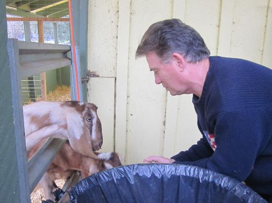 Casa Nuestra Winery and Vineyards: Feeding of the Goats