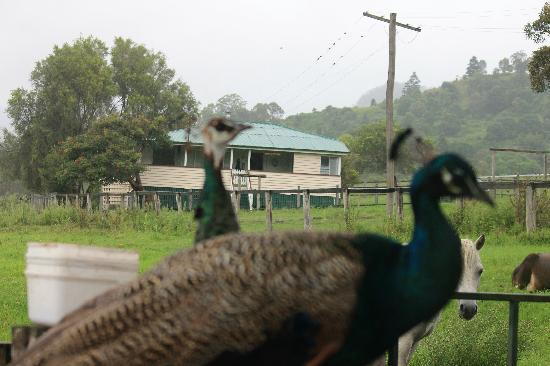 Cedar Glen Farmstay: Dairy Cottage - our home away from home