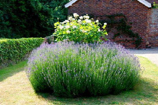 Heronshaw House : Lavender