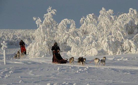 Hetta Huskies
