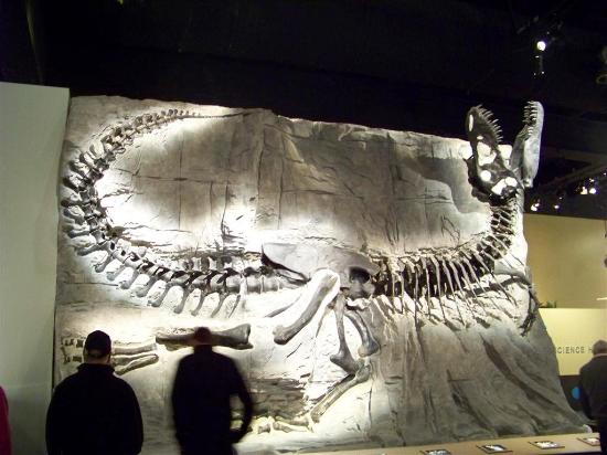 Royal Tyrrell Museum of Palaeontology : Great skeleton