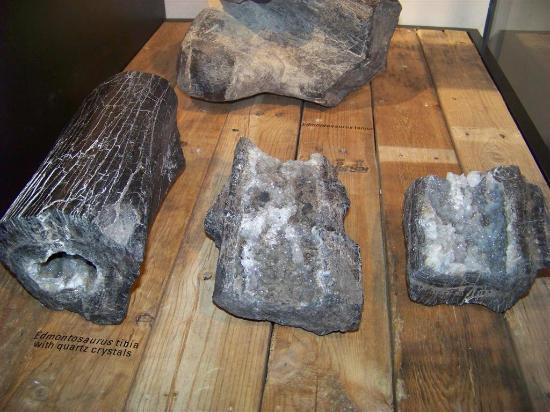 Royal Tyrrell Museum of Palaeontology: Fossilized bones