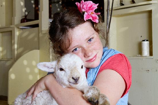 The Point Bed and Breakfast: lambs during spring