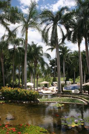 Casa Velas: Koi Ponds above Pool