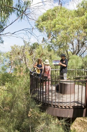 Indigenous Tours WA: Tree Top Walk