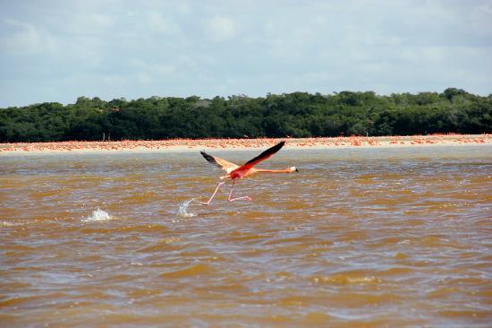 Celestun, Mexico: Un décollage