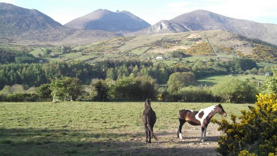 Tory Bush Cottages : Slieve Meelmore in the background