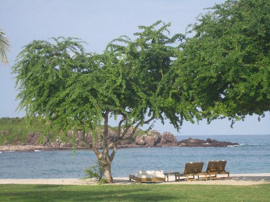 The St. Regis Punta Mita Resort: Trees on Beach