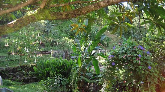 Cloud Forest Botanicals: Herb & Flower gardens