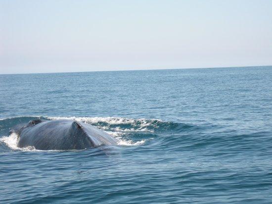 Las Brisas Huatulco: whale off the La Morena with Capitan Juan