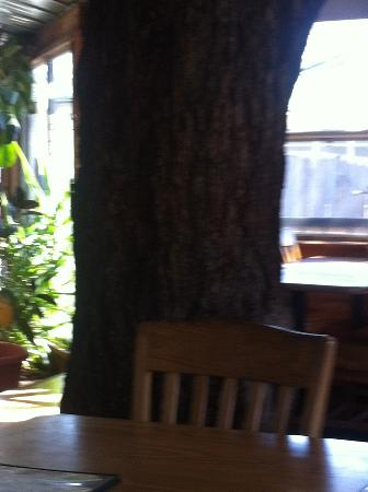 Riverside Cafe: Tree #1 in the dining room