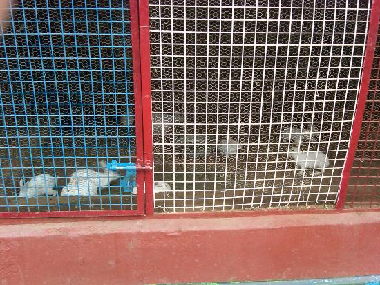 Aapno Ghar Amusement and Water Park: The mini-zoo with rabbits – Children's delight!