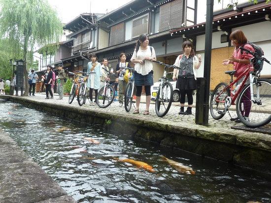 Takayama, Japan: 飛騨の町なかには小さな川が流れています / Beautiful little Seto river in Hida-Furukawa