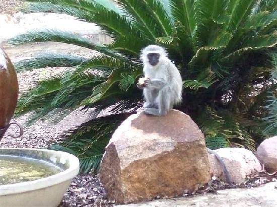 Marloth Kruger Lodges: Outside