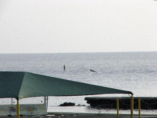 Kona Seaside Hotel: Spinner dolphin and paddle boarder