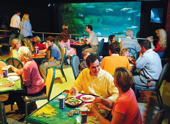 Quick Food Fix Review Of Ripley S Aquarium Feeding