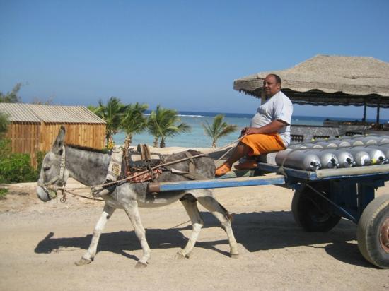 Mangrove Bay Resort Transport der Flaschen