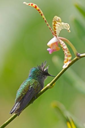 Au Jardin des Colibris: A bientôt au pays des colibris !