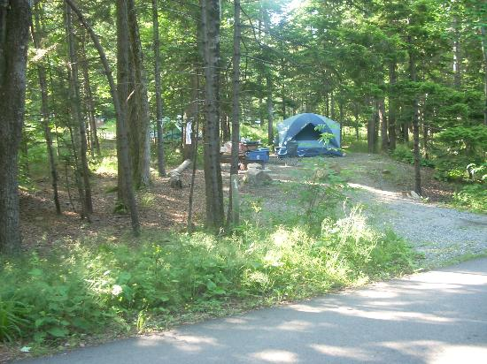Tent site at Blackwoods Campground