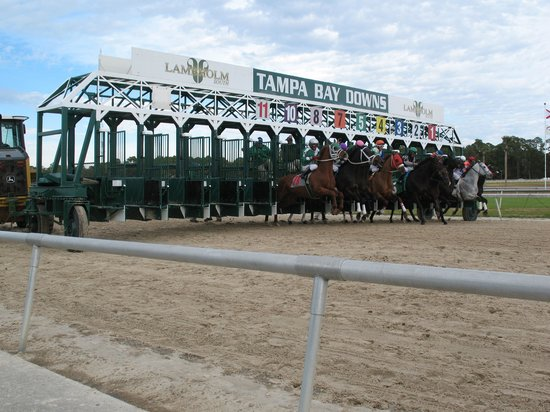 ‪Tampa Bay Downs‬