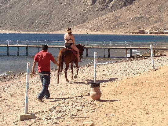 Horseriding Dahab: Trial horse ride along private beach at Happy Life Village, Dahab