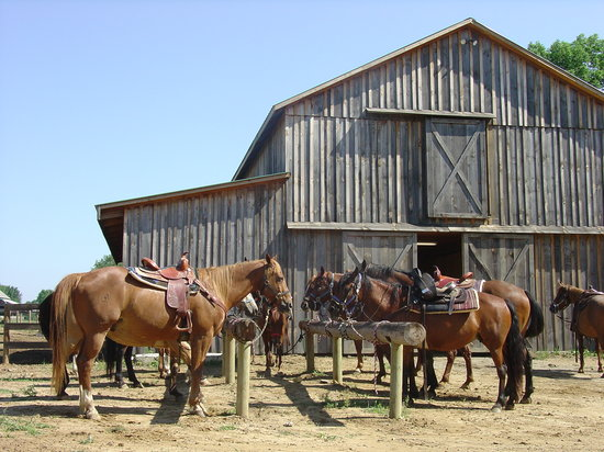 KD Guest Ranch: Saddling Up at the Hitching Post