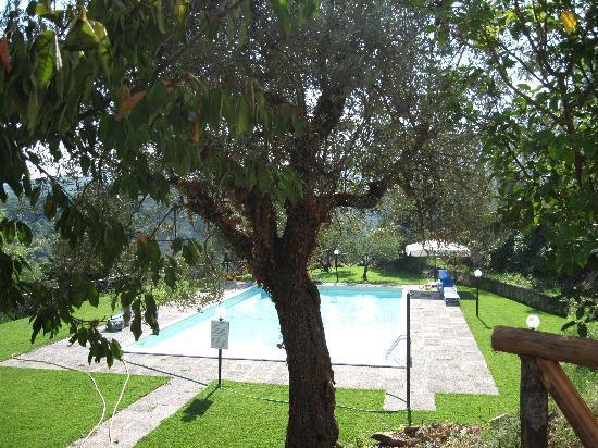 Agriturismo La Cianella: piscina immersa nell'uliveto