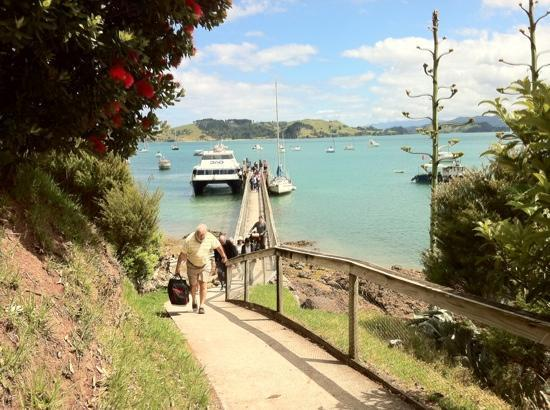 Coromandel Adventures - Day Tours : Enjoy arriving in Coromandel on the 360 Discovery Ferry and be greeted at the wharf by the Corom