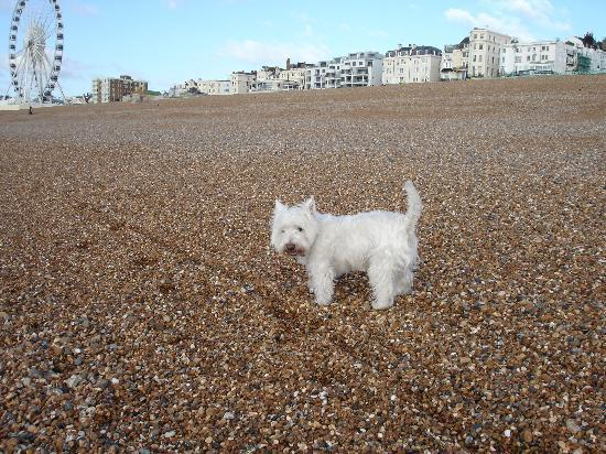 Avalon Guest Accommodation : Max enjoying his walk on the beach