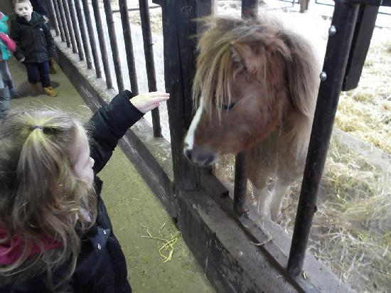 Greenmeadow Community Farm: the animals are so hands on