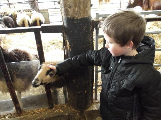 Greenmeadow Community Farm: my son liked the goats