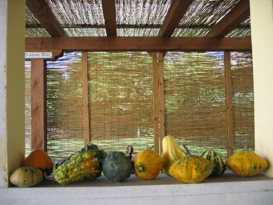 Residenza Serena: Ampio giardino, barbecue e biciclette a disposizione