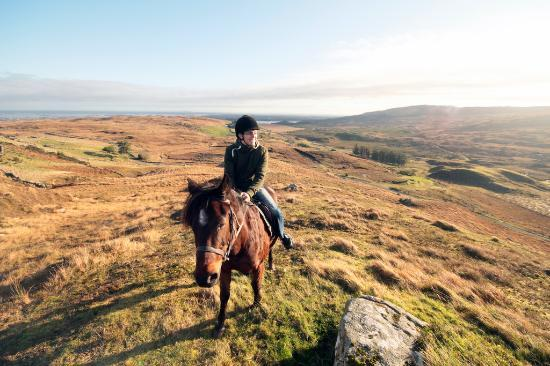 Knockillaree Riding Centre : The view from my horse of the landscape