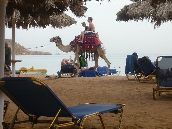 Iberotel Palace: The Lone Ranger patrolling the beach