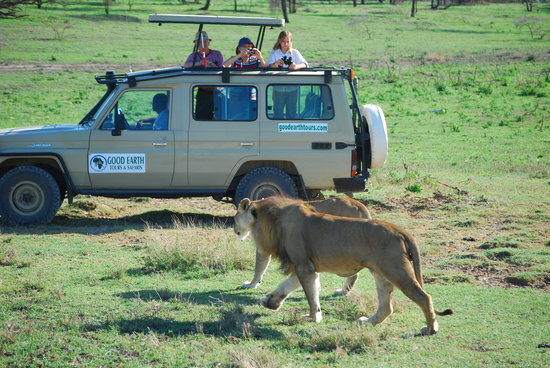 Arusha, Tanzania: Good Earth Safari vehicle tour