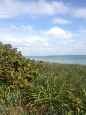 Bahia Honda State Park and Beach : dune view