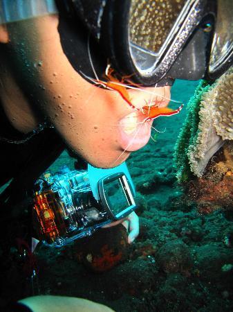 Blue Paradise Diving - Day Tours: トランベン クリーニングポイント