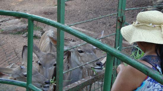 National Zoological Gardens of Sri Lanka: sneaking them food!