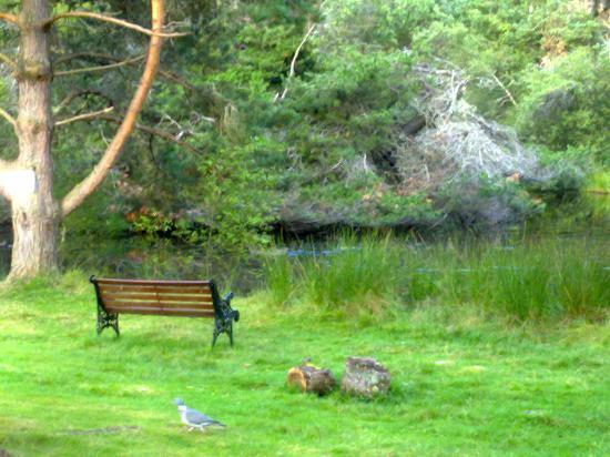 Fairwinds Hotel: Bench by the lochan.