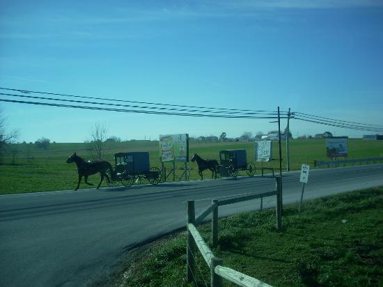 Mennonite Information Center : Amish buggies seen on our tour