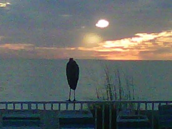The Diplomat Condominium Beach Resort: A Heron Sunset