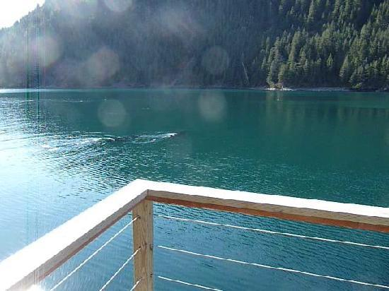 Orca Island Cabins: humpback whales seen form the yurt deck in May