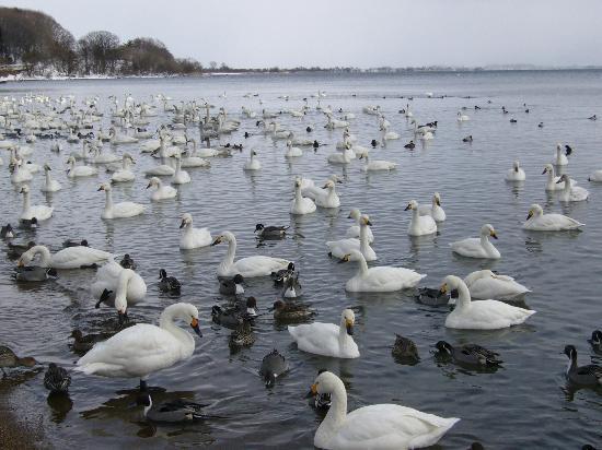 Lake Inawashiro: 猪苗代湖 長浜