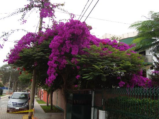 Benavides Family Guest House: Flowers everywhere on the street