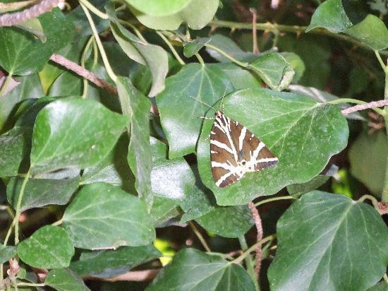 Hotel Aegean Village: Vallée des Papillons