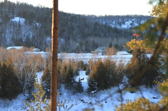 Auberge le Cosy Tremblant: View of the lake and you can see a deer! Isn't it amazing?