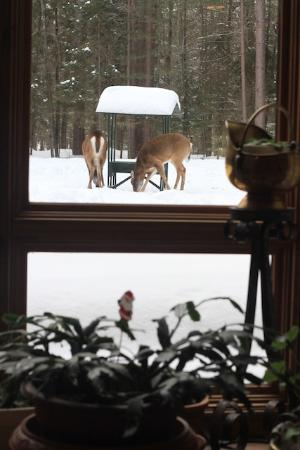 Auberge le Cosy Tremblant: Deer coming for brakfast - view from a dining room
